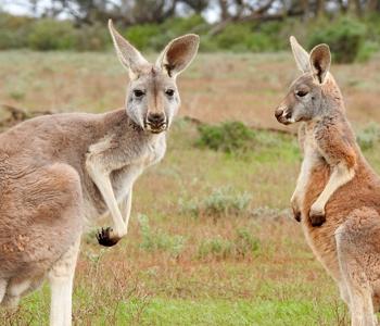 Autocamper i Australien, Rejs i Australien på egen hånd, Individuelle rejser til Australien | Rejsecenter Djursland klarer det praktiske!