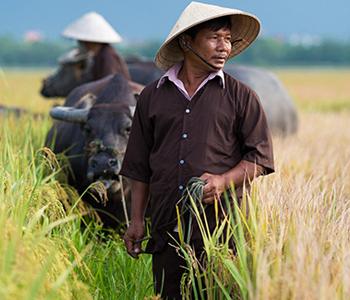 Vietnam - Rejsecenter Djursland