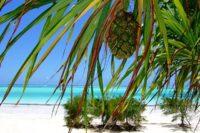 Zanzibar - Rejsecenter Djursland