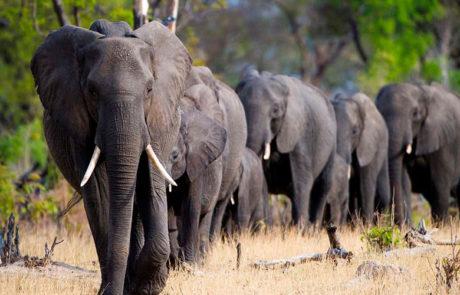 Victoria Falls & Chobe, Zimbabwe og Botswana med Rejsecenter Djursland