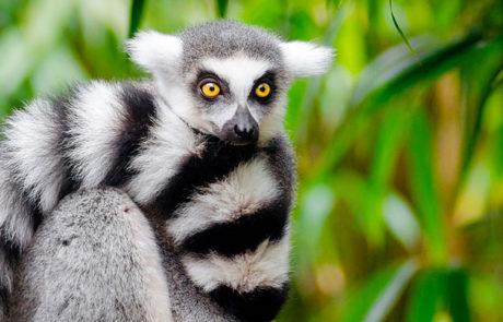 Rejs til Madagaskar med Rejsecenter Djursland