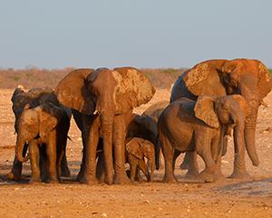 Rejs til Namibia www.rejsecenterdjursland.dk