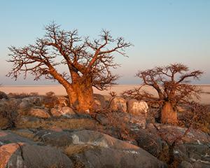 Namibia - www.rejsecenterdjursland.dk