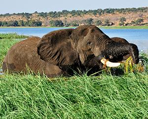 Chobe-floden - www.rejsecenterdjursland.dk