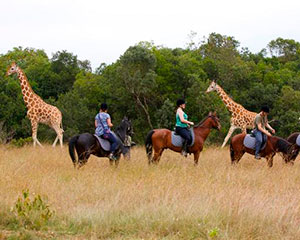 safari i Kenya - www.rejsecenterdjursland