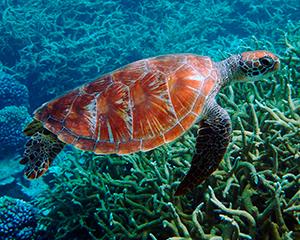 skildpadde - www.rejsecenterdjursland.dk