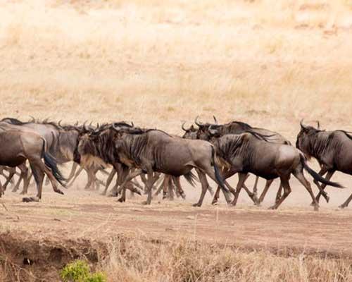 Elefant safari i kenya - www.rejsecenterdjursland.dk