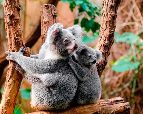Autocamper i Australien - www.rejsecenterdjursland.dk