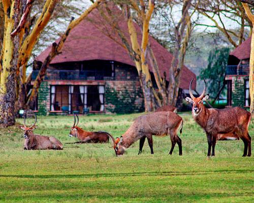rejse til kenya - www.rejsecenterdjursland.dk