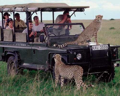 safari i kenya - masai mara - www.rejsecenterdjursland.dk