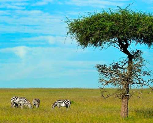 Masai Mara - safari i Kenya- www.rejsecenterdjursland.dk