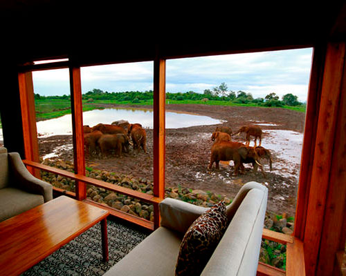 safari i afrika - www.rejsecenterdjursland.dk