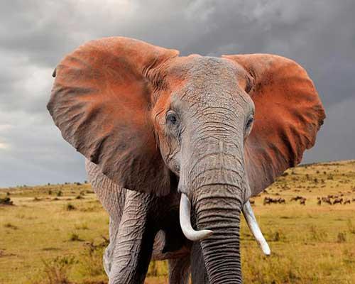 Abedare nationalpark - safari i Kenya - www.rejsecenterdjursland.dk