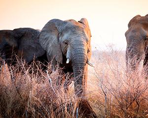 Kruger Nationalpark Sydafrika - www.rejsecenterdjursland.dk