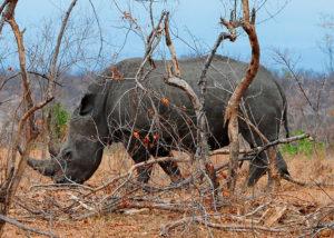 5 dage i Kruger Nationalpark | www.rejsecenterdjursland.dk