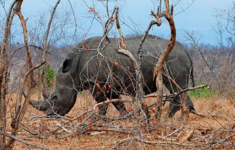 Rejser til det sydlige Afrika | 5 dage i Kruger Nationalpark | www.rejsecenterdjursland.dk