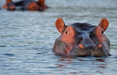 Rejser til det sydlige Afrika | På ekspedition i Sydafrika | | Sydlige Afrika | www.rejsecenterdjursland.dk