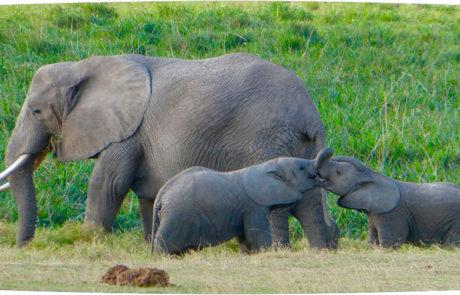Østafrika | Safari i Kenya | Rejsecenter Djursland