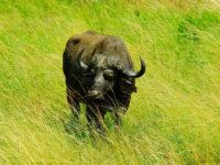 5 dage i Kruger Nationalpark   www.rejsecenterdjursland.dk