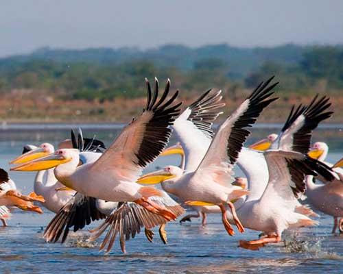 lake nakuru safari i Kenya - www.rejsecenterdjursland.dk
