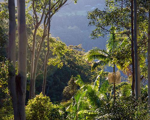 Tropisk regnskov Australien - www.rejsecenterdjursland.dk