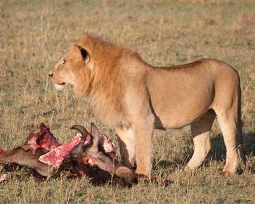 safari i Kenya | www.rejsecenterdjursland.dk