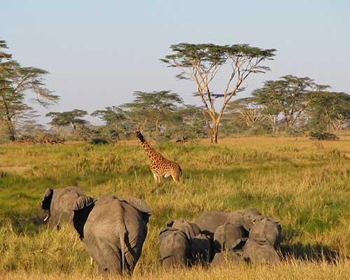 Klassisk safari i Tanzania - Safari ved Lake Manyara - www.rejsecenterdjursland.dk