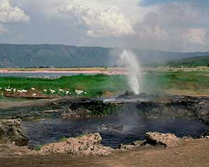 Klassisk safari i Lake Manyara - www.rejsecenterdjursland.dk