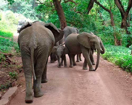Tanzania og safari - www.rejsecenterdjursland.dk