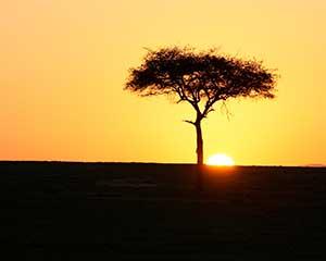 Masai Mara i Kenya - www.rejsecenterdjursland.dk