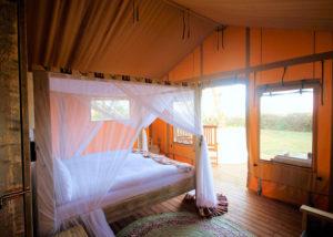 Glamping og safari - Rejsecenter Djursland