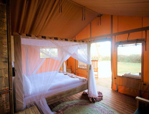 Afslapning og safari ved Lake Manyara