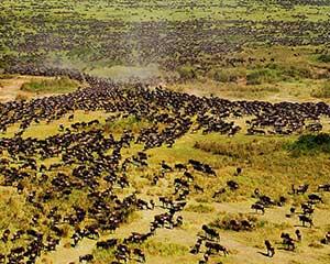Den store migration - www.rejsecenterdjursland.dk