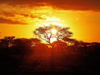 Rejs individuelt | Safari i Afrika med www.rejsecenterdjursland.dk