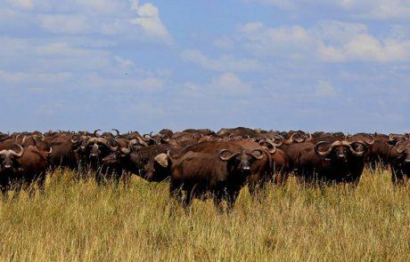 Østafrika | safari i serengeti med www.rejsecenterdjursland.dk