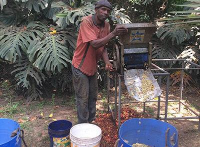 Mama Leos kaffeplantage - Tanzania - www.rejsecenterdjursland.dk