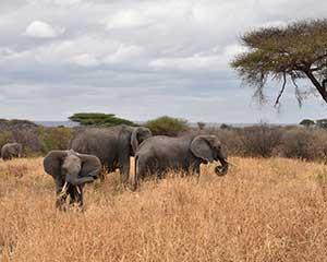 Mød vores naboer - safari i Tarangiri - www.rejsecenterdjursland.dk