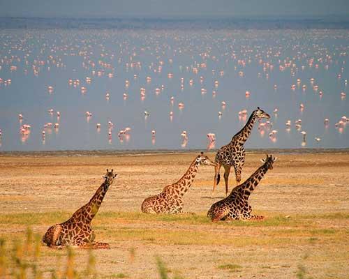 Grupperejse til Tanzania - lake manyara - www.rejsecenterdjursland.dk