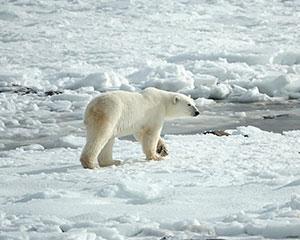 Arktis - www.rejsecenterdjursland.dk