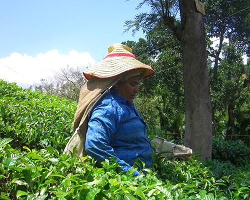 Landbrug i Sydindien - www.rejsecenterdjursland.dk