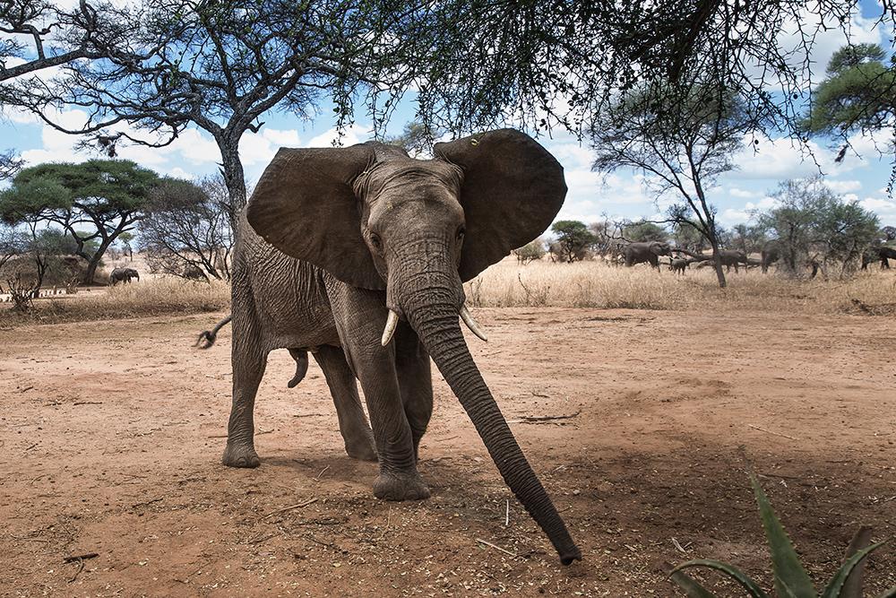 Safari & Rejser til det sydlige Afrika | Rejsecenter Djursland