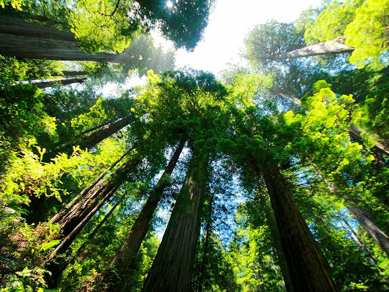 Sequoia nationalpark - Californien Rundt